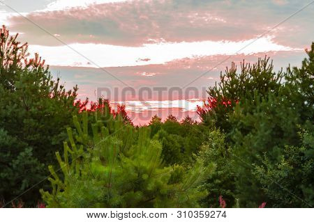 Pink Sunset On The Forest Horizon