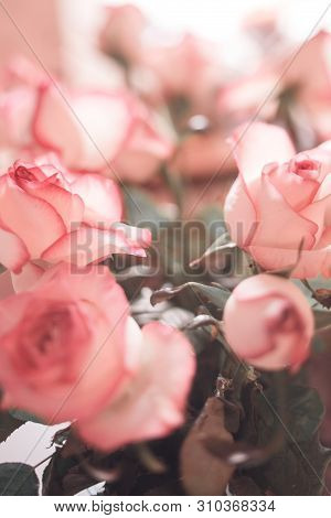 Beautiful Pattern With Flowers Of Silk Pink Roses. Wallpaper Flower Pattern With Vintage Toned.