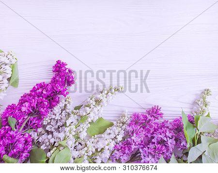 Lilac Flower On White Wooden Background Season