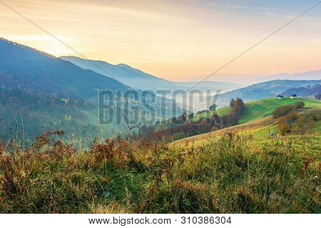 Countryside In Mountains At Dawn. Grassy Rural Slopes With Fields And Trees In Autumn. Ridge Rolling
