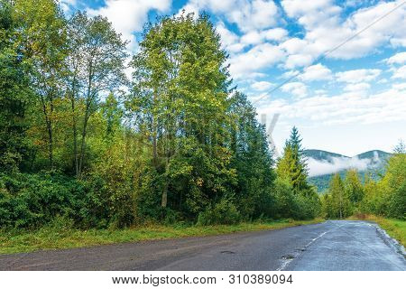 Old Country Road Through Spruce Forest. Beautiful Transportation Morning Scenery. Fluffy Clouds On T