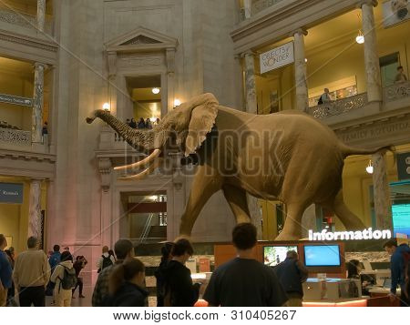 Washington, Dc, Usa -april, 3, 2017: Main Foyer Of The Smithsonian Natural History Museum In Washing