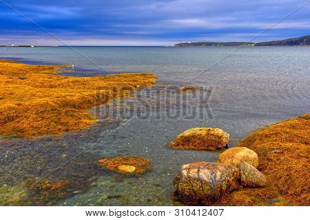 A colourful kelp flat at low tide, Rocky Harbour, Gros Morne National Park, Newfoundland, Canada poster