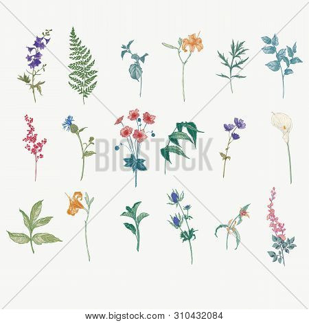 Vintage Wild Flower Illustration Set. Isolated Colored Botanical Herbs And Flowers Hand Drawn Graphi