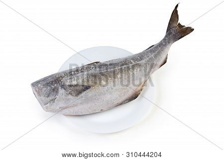 Frozen Carcass Of Saithe, Also Known As Coalfish Without Head On Dish On A White Background