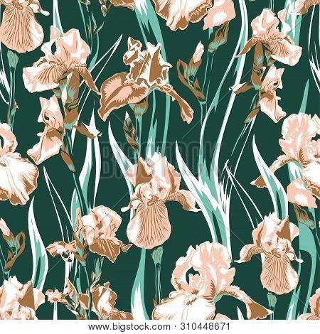 Wildflower Iris Flower Pattern. Full Name Of The Plant Irises. Salmon Iris Flower For Background, Te