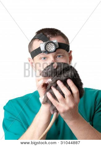 The man veterinary surgeon examines a domestic rat poster