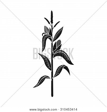 Vector Design Of Corn And Stalk Logo. Set Of Corn And Field Vector Icon For Stock.