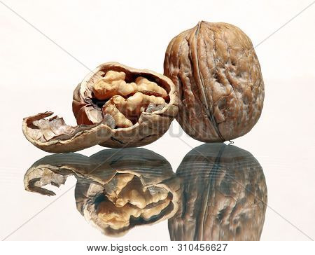 Whole Walnut And Walnut Kernel With Amazing Reflections Against High Key Background  With Copy Space
