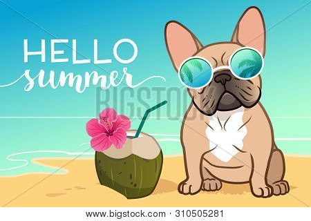French Bulldog Puppy Wearing Reflective Sunglasses On A Sandy Beach, Ocean In Background, Coconut Dr