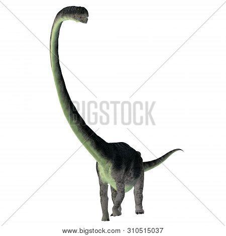 Omeisaurus Dinosaur Front 3d Illustration - Omeisaurus Was A Herbivorous Sauropod Dinosaur That Live
