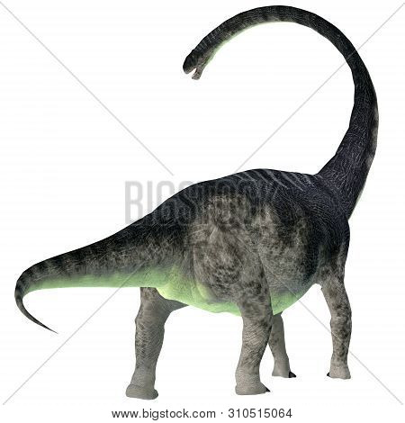 Omeisaurus Dinosaur Tail 3d Illustration - Omeisaurus Was A Herbivorous Sauropod Dinosaur That Lived