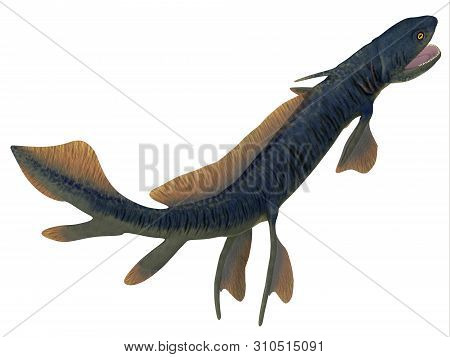 Orthacanthus Shark Tail 3d Illustration - Orthacanthus Was A Carnivorous Freshwater Shark That Lived