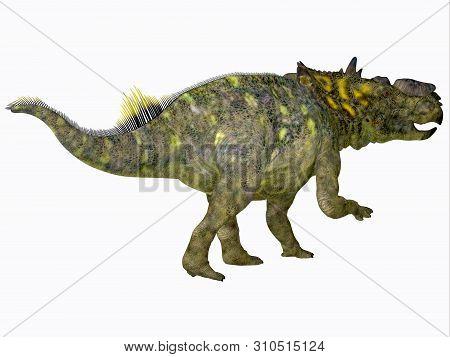 Pachyrhinosaurus Dinosaur Tail 3d Illustration - Pachyrhinosaurus Was A Ceratopsian Herbivorous Beak