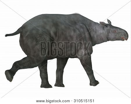 Paraceratherium Mammal Tail 3d Illustration - Paraceratherium Was A Herbivorous Mammal That Lived In