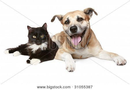Close-up Portrait Of A Cat And Dog