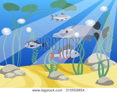 Underwater World, A Reservoir. Animals And Nature Of The Lake. In Minimalist Style Cartoon Flat Vect
