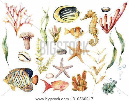 Watercolor Set With Tropical Fishes And Coral Reef Plants. Hand Painted Butterflyfish, Angelfish, Se