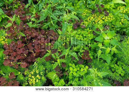 Natural Background - Meadow With A Variety Of Grassy Vegetation During The Rain Close Up