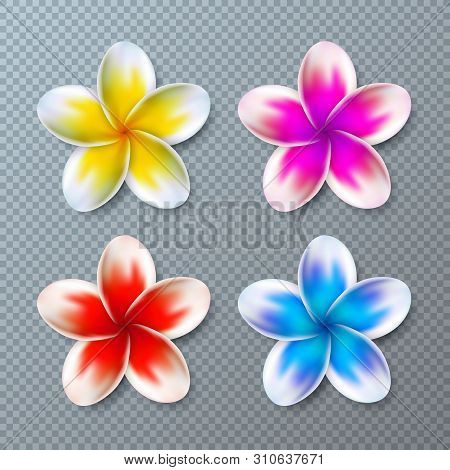 Vector Illustration With Colorful Plumeria Flower Collection Isolated On Transparent Background. Vec