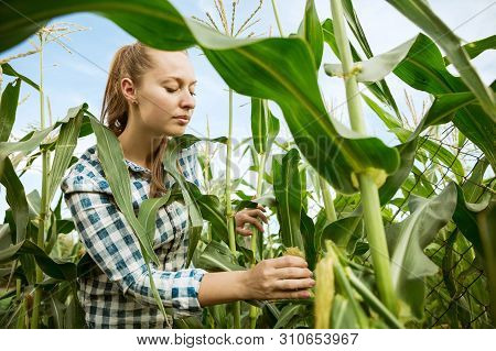 Young Farmer Working At Her Garden In Sunny Day. Woman Engaged In The Cultivation Of Eco Friendly Pr