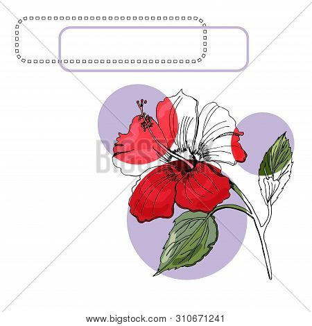 Set With Monochrome, Colored Of Hibiscus Flower, Lilac Circles And Frames. Hand Drawn Ink Sketch Iso