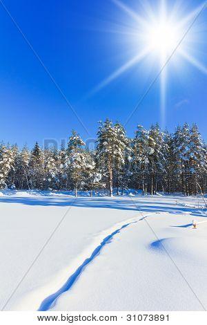 Frozen Shiny Landscape