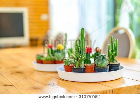 Little Various Cactus In The White Circle Plate That Lay On Wooden Table For Decorate Meeting Room I