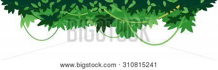Decorative Dense Leaves Of Tropical Trees With Lianas Placed On Top Isolated, Decorative Composition
