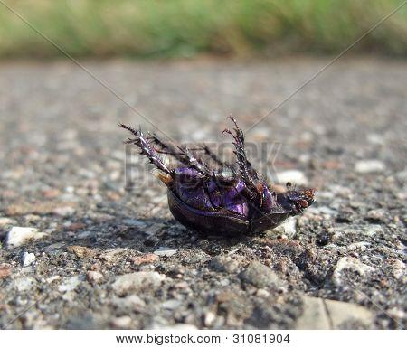 Dead Bug Supine On Pavement