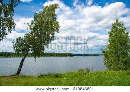 Beautiful Bank Of The River Uvod With A Tilted Birch On A Summer Day.