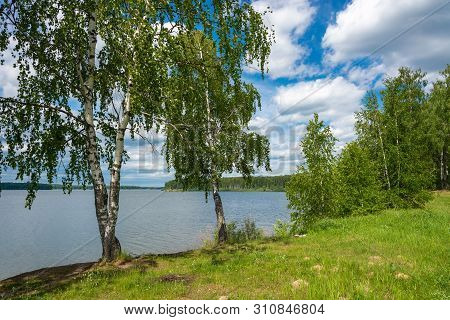 Large Branched Birch On The Bank Of The River Uvod On A Summer Day.