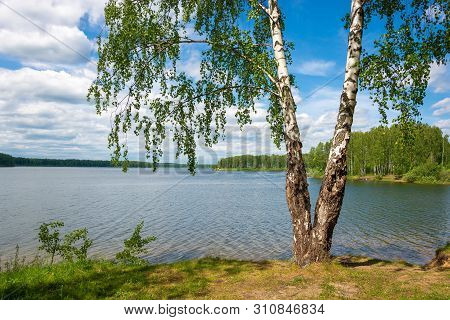 Large Birch With A Double Trunk On The Bank Of The River Uvod On A Summer Day.