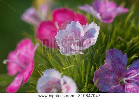 Macro Close-up Shot Of Bright Beautiful Flowers.