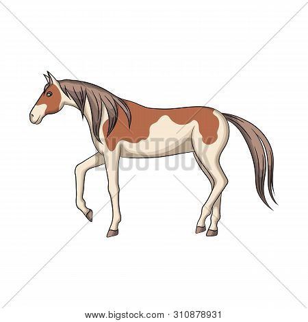 Isolated Object Of Horse And Steed Sign. Set Of Horse And Western Stock Vector Illustration.