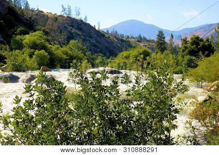 Lush plants and trees at a riparian woodland besides the raging Kern River with rapids caused from spring snowmelt taken in the Sierra Nevada Mountains, CA poster