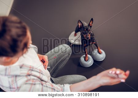 Top View Of Owner Showing Food To Her Cute Dark Dog