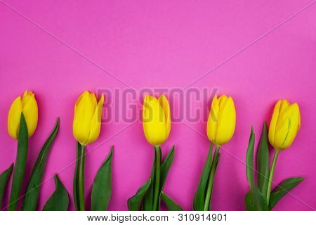 Tulips In A Field Of Tulips. Bright Tulips. Beautiful Tulips In Spring Time. Colorful Tulips On A Pi