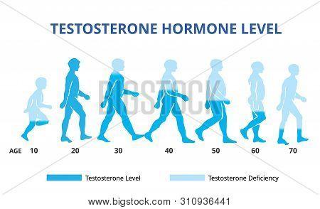 Testosterone Hormone Levels Chart, Vector File Illustration