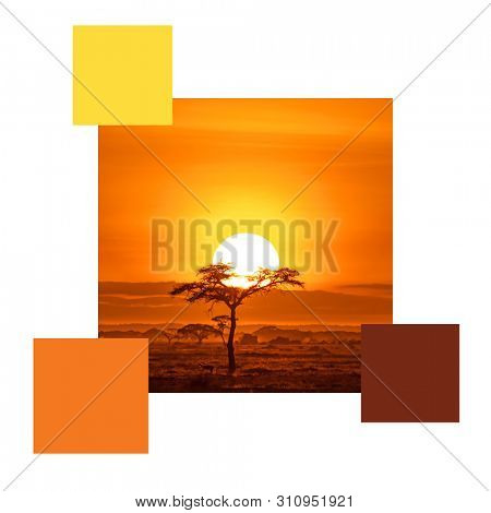 Impala under an acacai tree. Sunrise in Amboseli, Kenya, set with colour swatches and space for text. Colour scheme themed image.