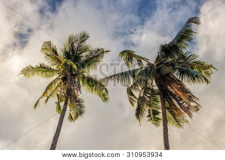 Palm Tree With Coconuts Against The Blue Sky On A Sandy Beach In The Philippines, El Nido