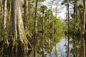 Trees and vegetation populate the Florida Everglades in southern Florida poster