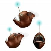 Humpback Anglerfish illustration from 3 different angles poster