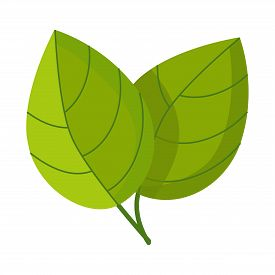 Isolated Object Of Leaf And Ginger Sign. Set Of Leaf And Plant Stock Vector Illustration.