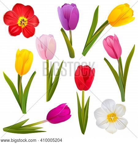 Vector Tulip Icons Isolated On White Background