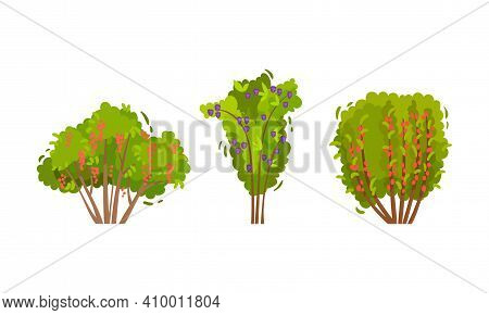 Branched Berry Bush And Shrub With Ripe Fruit Vector Set