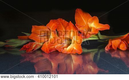 The Red Gladiolus With Green Sheet On Black Background. The Bouquet Colour Rests Upon Table With Ref