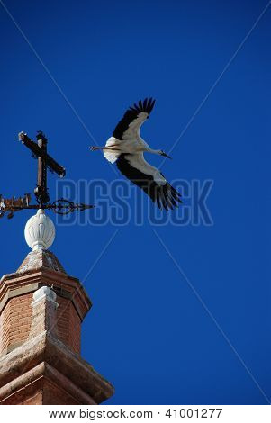 Stork taking flight, Andalusia, Spain.