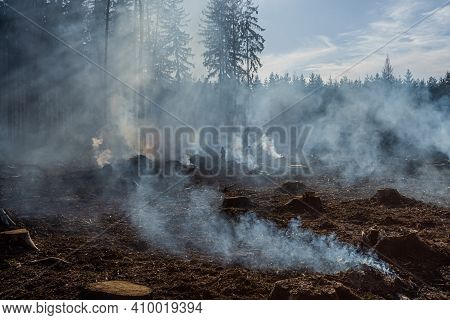 Big Field With Smoke After Wildfire. All Grass And Trees Are Burnt After Forest Fire Or Forestry Wor