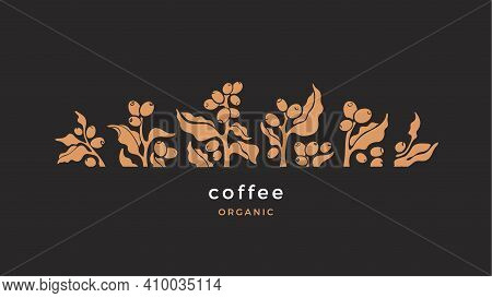 Coffee Branch. Vector Plant With Leaf, Shape Of Berry, Arabica Beans. Tropical Illustration On Black